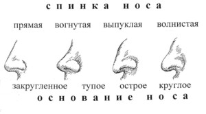 Строение носов